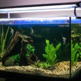 難易度が高い水槽や熱帯魚の引っ越し方法