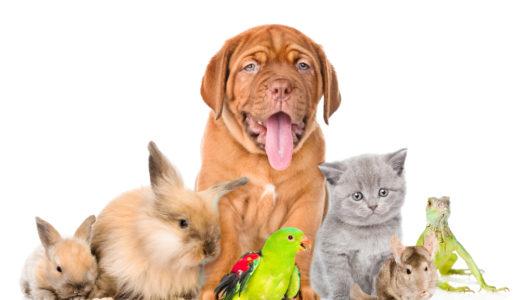 犬や猫などペットと引越しする時に注意するポイントと必要な手続き