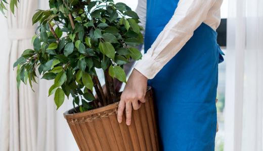 植木の引越し費用と上手な梱包方法