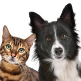 ペット禁止物件で犬や猫を飼っていることがバレた場合と対処法