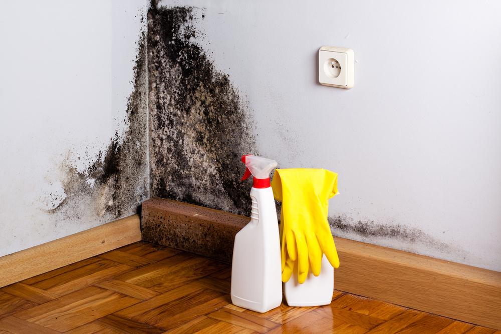 部屋 カビ 除去 家のカビ対策!みんながやってる方法トップ10