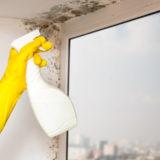 窓のサッシについたカビを中性洗剤や片栗粉を使って落とす方法&結露対策