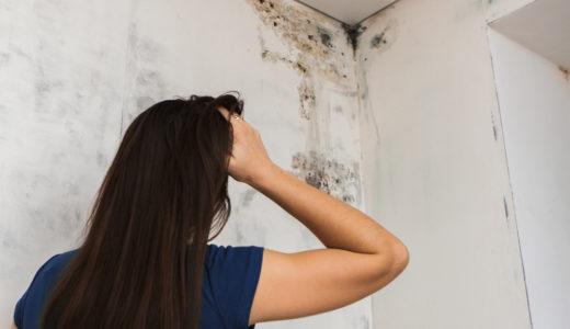【壁にカビが生えた時の除去方法】床などのカビを防ぐ予防法と除去法